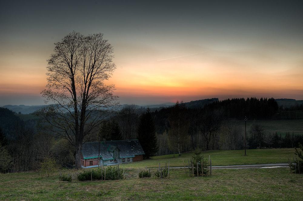 Sunset Maple
