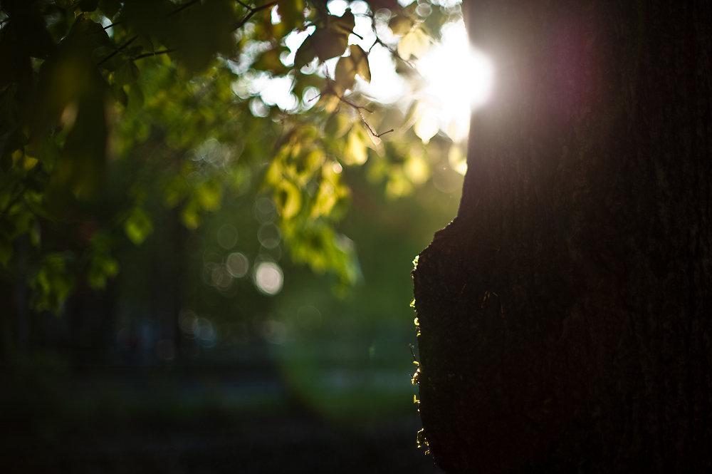 20100615233205-tree-trunk-in-sunset.jpg