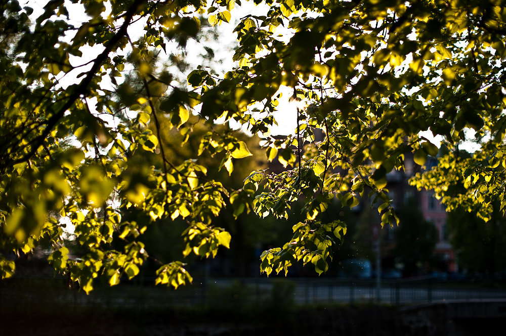 20100615232128-green-leaves-in-sunset.jpg